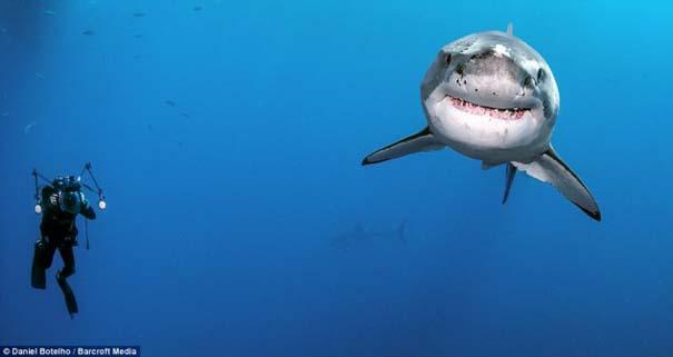 Δύτης ισχυρίζεται πως οι καρχαρίες είναι ακίνδυνοι, το «αποδεικνύει» με φωτογραφίες (3)