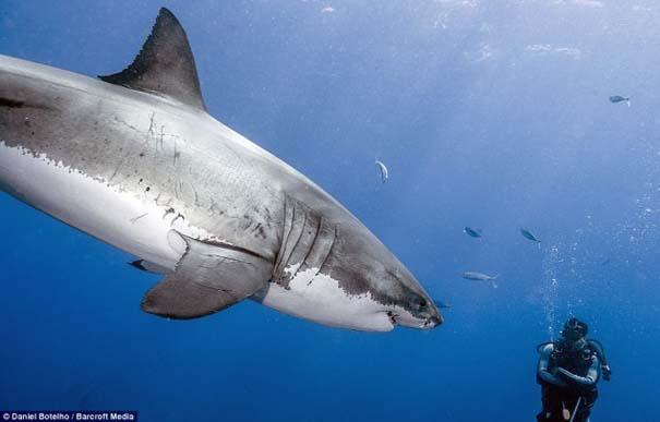 Δύτης ισχυρίζεται πως οι καρχαρίες είναι ακίνδυνοι, το «αποδεικνύει» με φωτογραφίες (4)