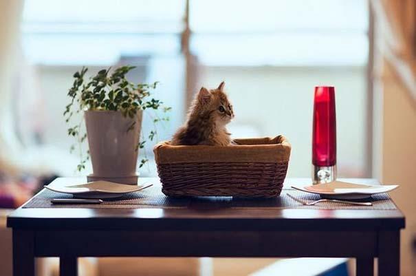 Ίσως το πιο χαριτωμένο γατάκι που έχετε δει (1)
