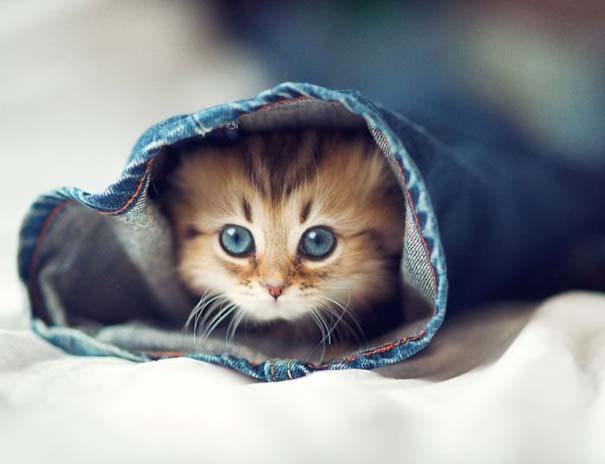 Ίσως το πιο χαριτωμένο γατάκι που έχετε δει (2)