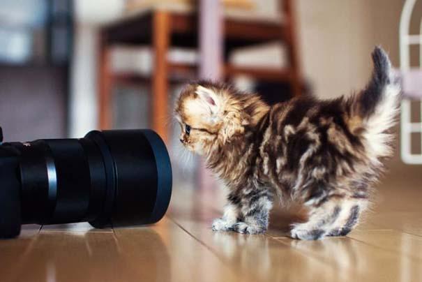 Ίσως το πιο χαριτωμένο γατάκι που έχετε δει (3)