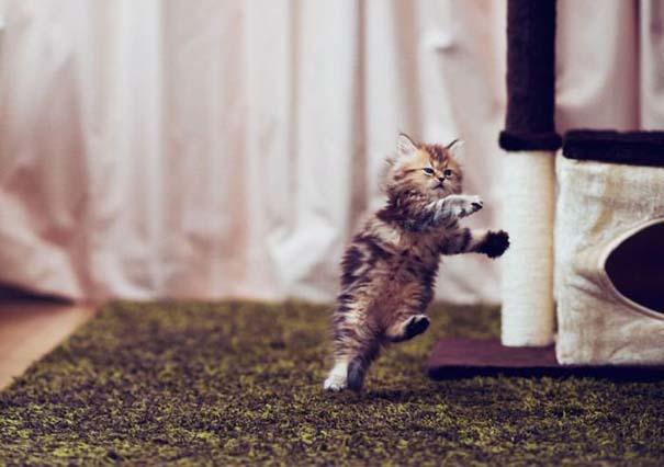Ίσως το πιο χαριτωμένο γατάκι που έχετε δει (5)