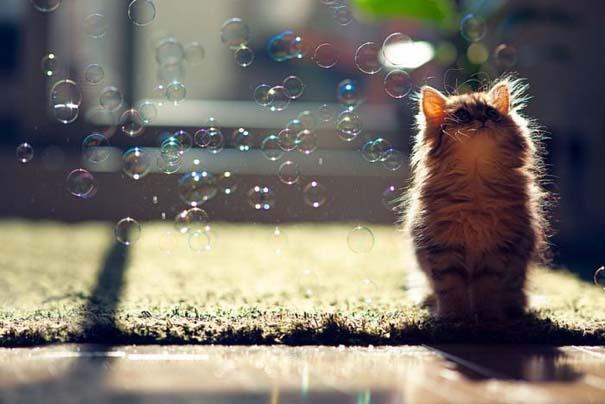Ίσως το πιο χαριτωμένο γατάκι που έχετε δει (7)