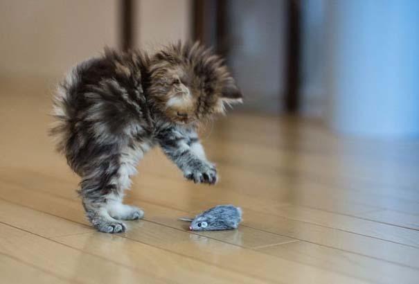 Ίσως το πιο χαριτωμένο γατάκι που έχετε δει (9)