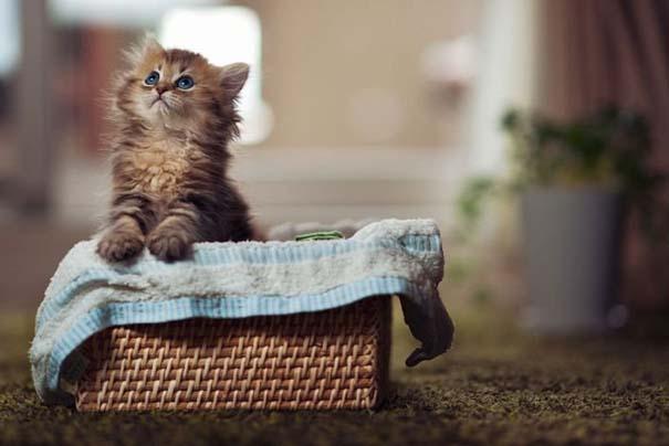 Ίσως το πιο χαριτωμένο γατάκι που έχετε δει (10)