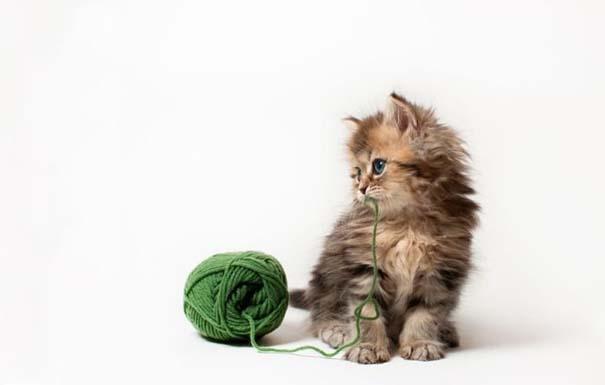 Ίσως το πιο χαριτωμένο γατάκι που έχετε δει (11)