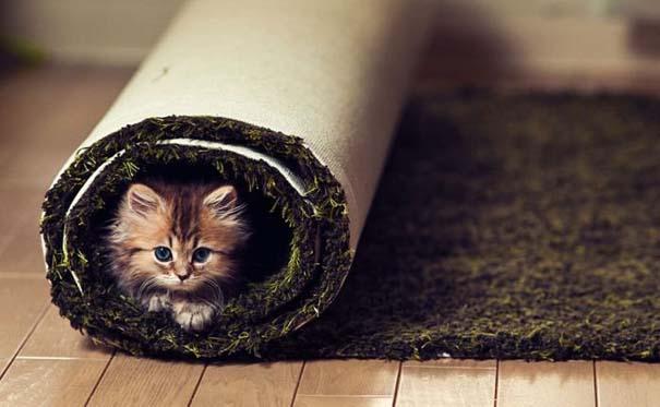 Ίσως το πιο χαριτωμένο γατάκι που έχετε δει (12)