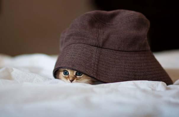 Ίσως το πιο χαριτωμένο γατάκι που έχετε δει (14)