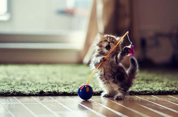 Ίσως το πιο χαριτωμένο γατάκι που έχετε δει (15)
