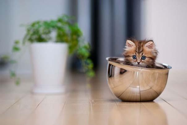 Ίσως το πιο χαριτωμένο γατάκι που έχετε δει (16)