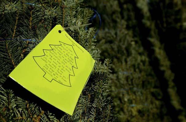 Πως γίνεται η καλλιέργεια και συγκομιδή των Χριστουγεννιάτικων Δέντρων (18)