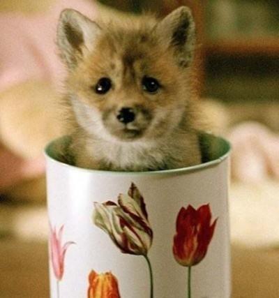 Μικροσκοπικά σκυλιά (2)