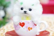 Μικροσκοπικά σκυλιά (11)