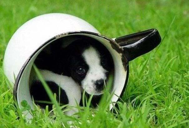 Μικροσκοπικά σκυλιά (12)