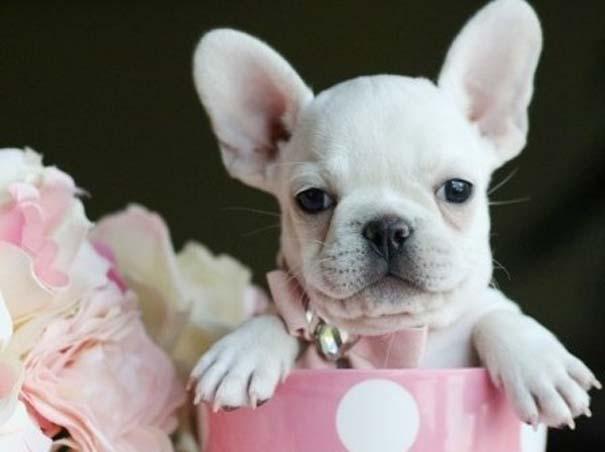 Μικροσκοπικά σκυλιά (14)