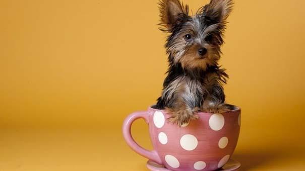Μικροσκοπικά σκυλιά (16)