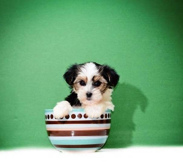 Μικροσκοπικά σκυλιά (18)