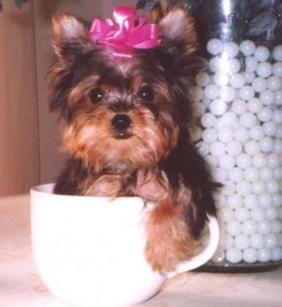 Μικροσκοπικά σκυλιά (19)