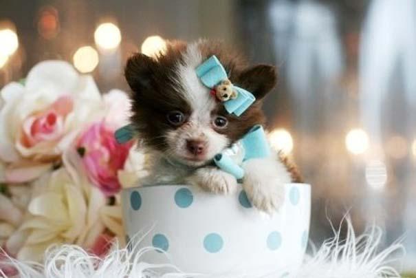 Μικροσκοπικά σκυλιά (20)