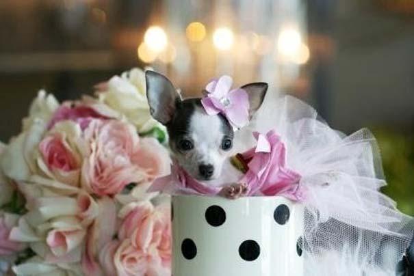 Μικροσκοπικά σκυλιά (21)