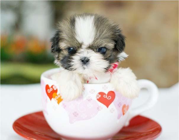 Μικροσκοπικά σκυλιά (23)