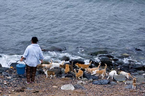 Το νησί παράδεισος για γάτες στην Ιαπωνία (1)