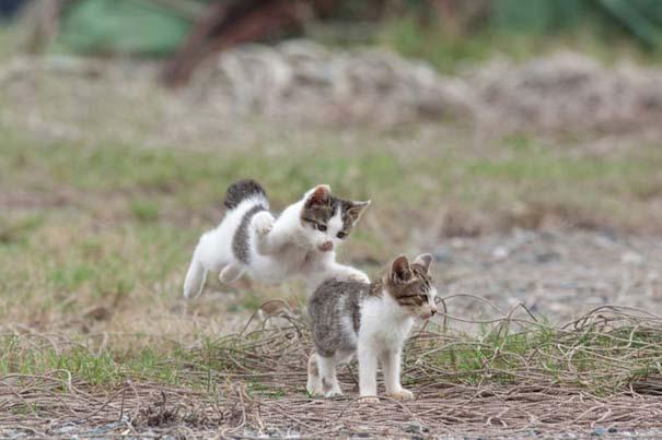 Το νησί παράδεισος για γάτες στην Ιαπωνία (2)