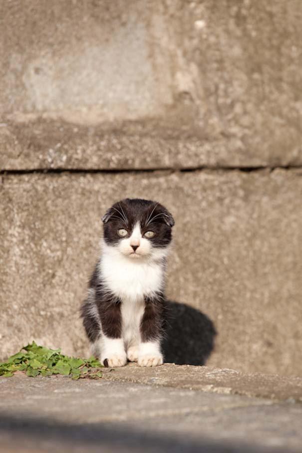 Το νησί παράδεισος για γάτες στην Ιαπωνία (3)