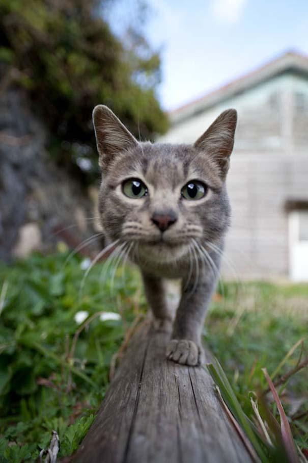 Το νησί παράδεισος για γάτες στην Ιαπωνία (4)