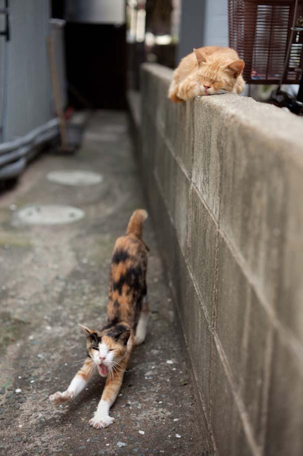 Το νησί παράδεισος για γάτες στην Ιαπωνία (5)