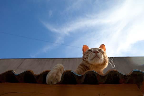 Το νησί παράδεισος για γάτες στην Ιαπωνία (11)