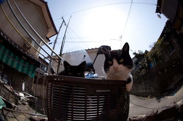 Το νησί παράδεισος για γάτες στην Ιαπωνία (12)