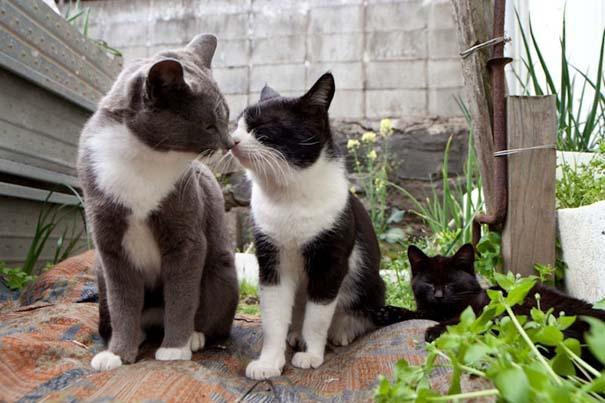 Το νησί παράδεισος για γάτες στην Ιαπωνία (14)