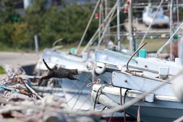 Το νησί παράδεισος για γάτες στην Ιαπωνία (15)
