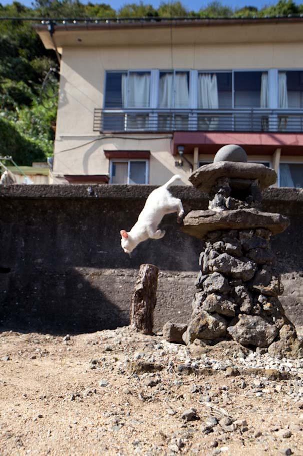 Το νησί παράδεισος για γάτες στην Ιαπωνία (19)