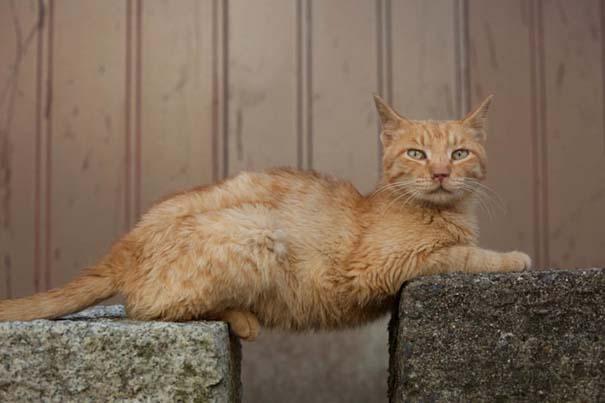 Το νησί παράδεισος για γάτες στην Ιαπωνία (20)