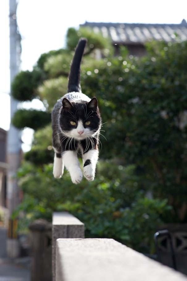 Το νησί παράδεισος για γάτες στην Ιαπωνία (21)