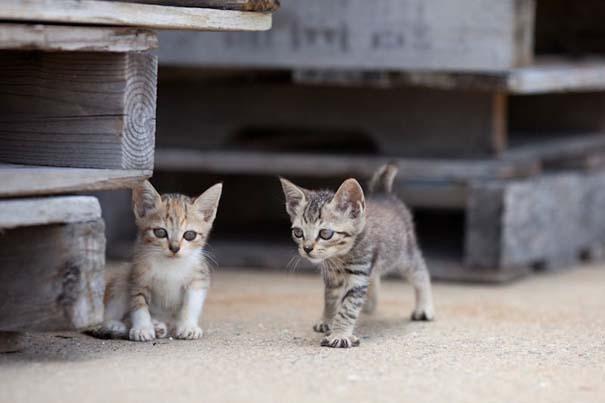Το νησί παράδεισος για γάτες στην Ιαπωνία (22)
