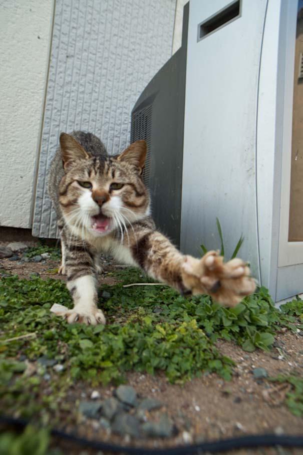 Το νησί παράδεισος για γάτες στην Ιαπωνία (23)