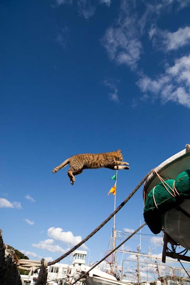 Το νησί παράδεισος για γάτες στην Ιαπωνία (24)