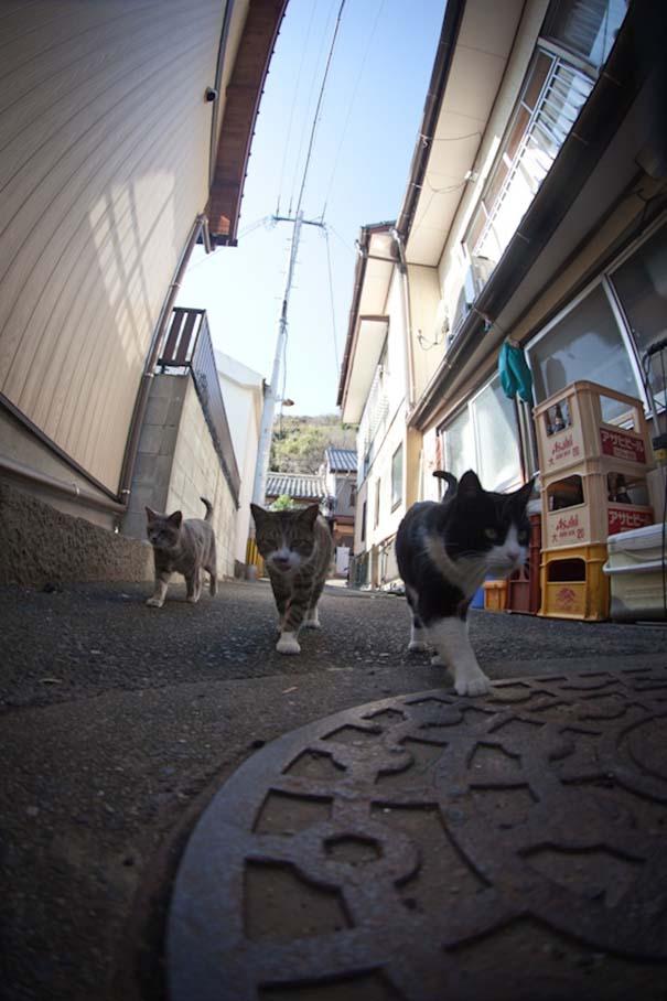 Το νησί παράδεισος για γάτες στην Ιαπωνία (26)