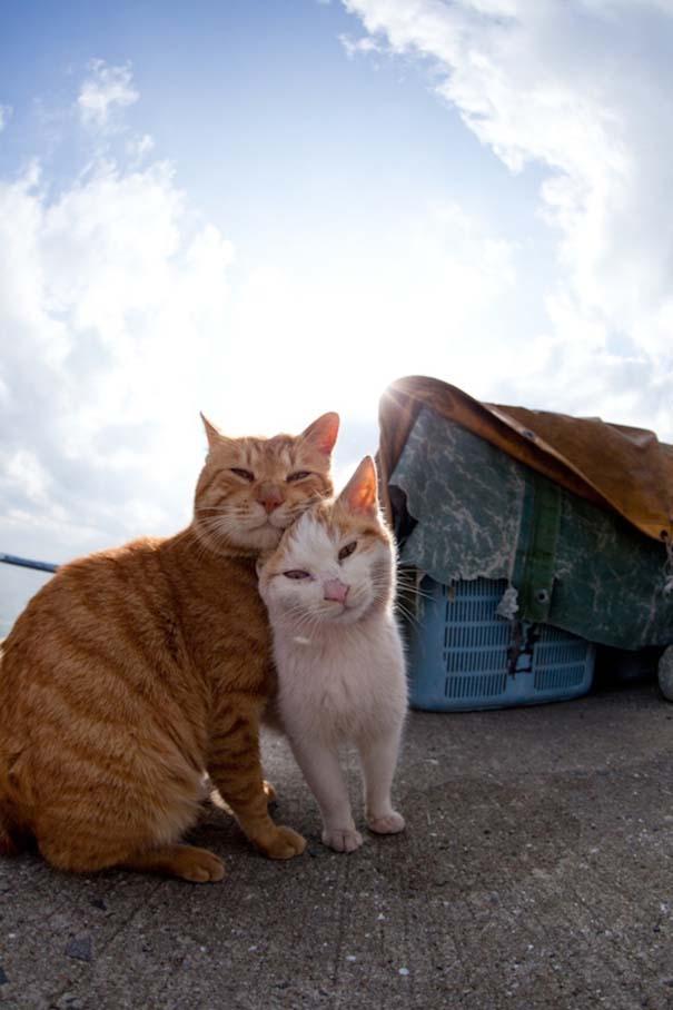 Το νησί παράδεισος για γάτες στην Ιαπωνία (27)