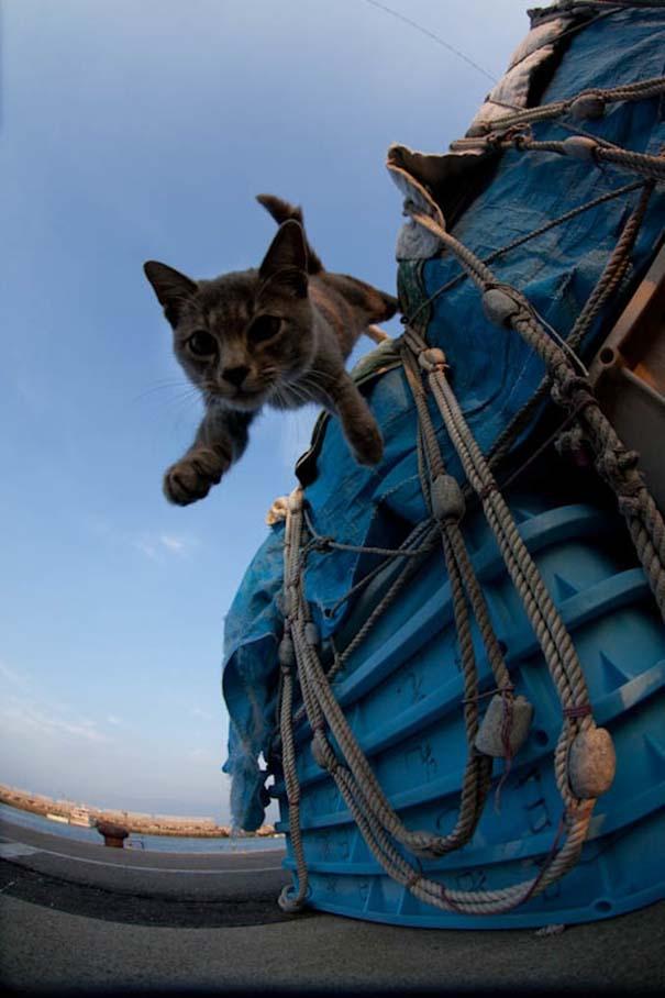 Το νησί παράδεισος για γάτες στην Ιαπωνία (28)