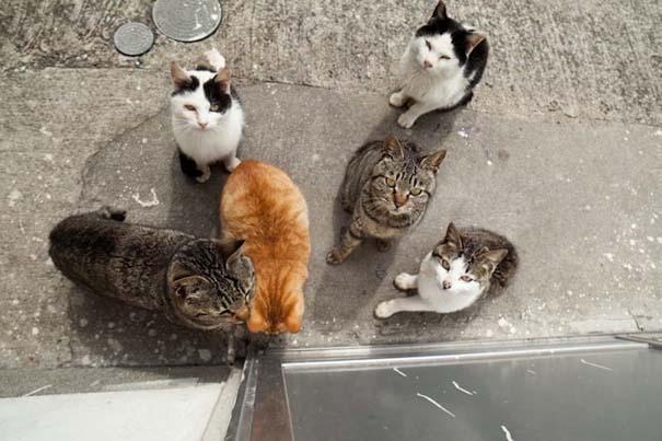 Το νησί παράδεισος για γάτες στην Ιαπωνία (29)