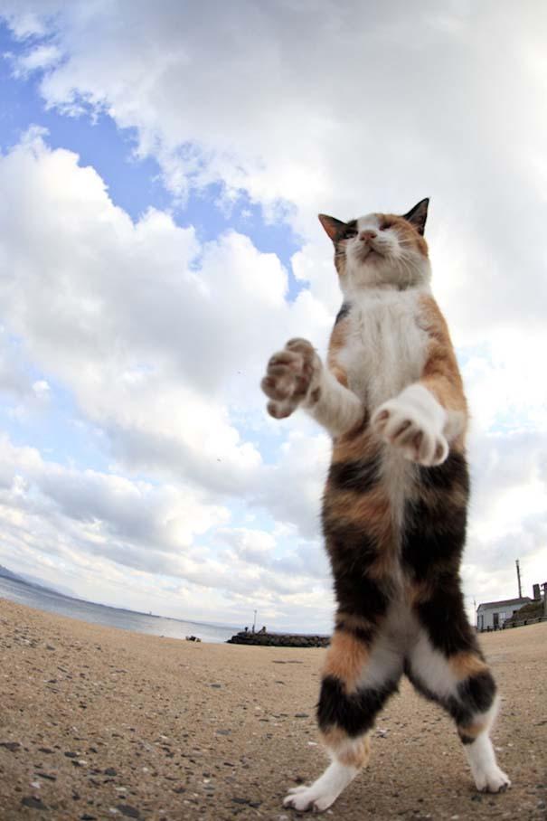 Το νησί παράδεισος για γάτες στην Ιαπωνία (30)