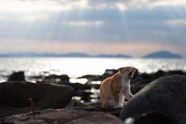 Το νησί παράδεισος για γάτες στην Ιαπωνία (31)