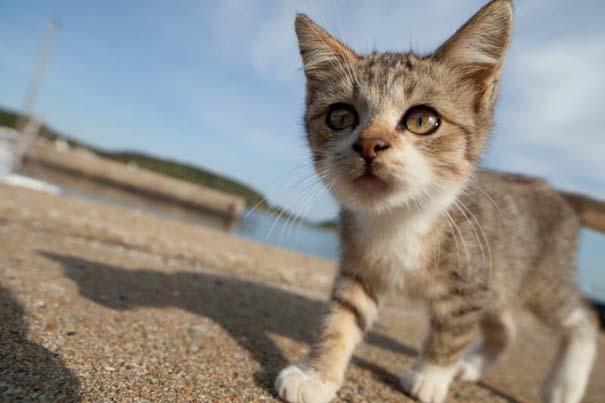 Το νησί παράδεισος για γάτες στην Ιαπωνία (32)