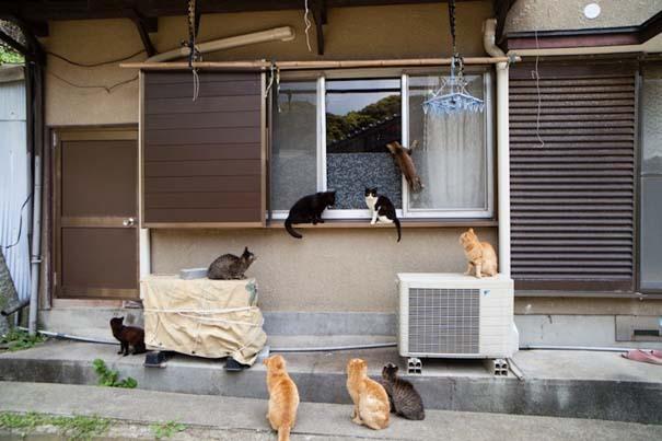 Το νησί παράδεισος για γάτες στην Ιαπωνία (33)