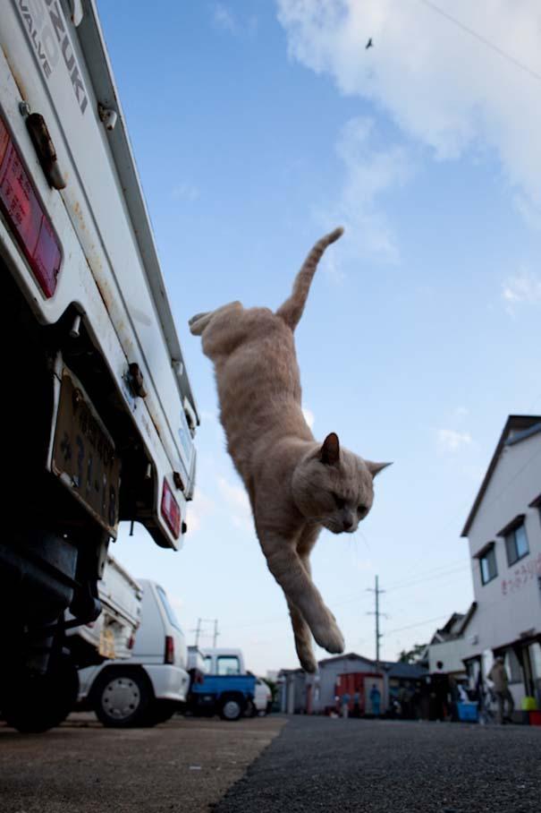 Το νησί παράδεισος για γάτες στην Ιαπωνία (34)