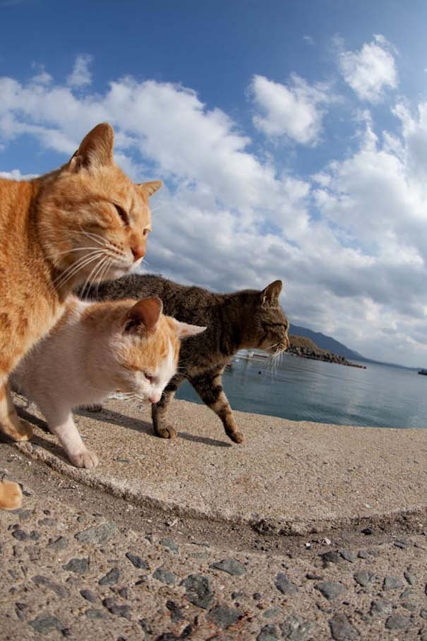 Το νησί παράδεισος για γάτες στην Ιαπωνία (35)